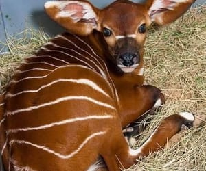 bongo and cute image