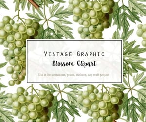 botany, vintage clip art, and vintage graphic image