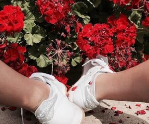flowers, red flowers, and geraniums image