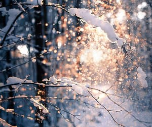magical, snow, and tree image
