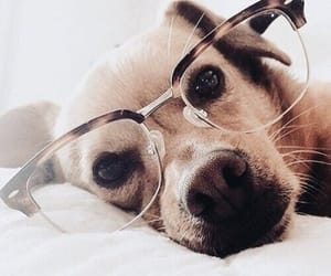 doggy and cute image