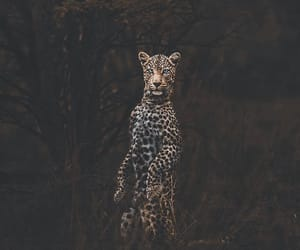 beautiful, photografy, and leon image