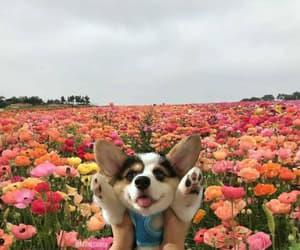 dog, 🌸, and 🌼 image