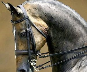 aesthetic, equine, and grey image