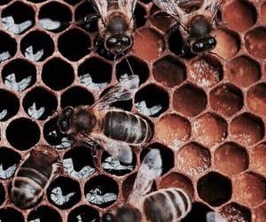 theme, bee, and honey image