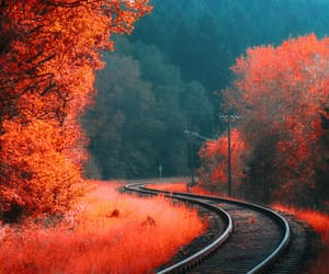 autumn, nature, and red image