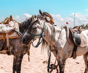 beach, Casablanca, and morocco image