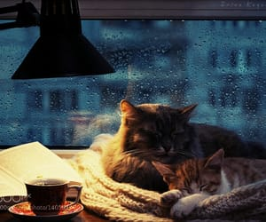 cats, cozy, and days image