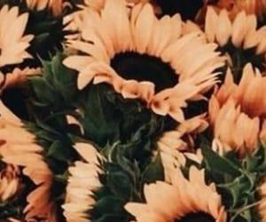 header, sunflower, and twitter image