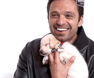 actor, dog, and sebastian stan image