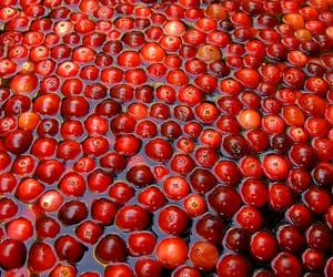 autumn, cranberries, and fruit image