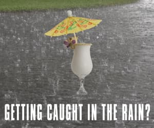 drinks, humor, and raining image