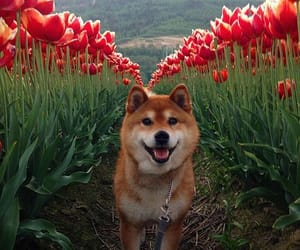 dog, aesthetic, and flowers image