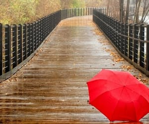 autumn, bridge, and rain image