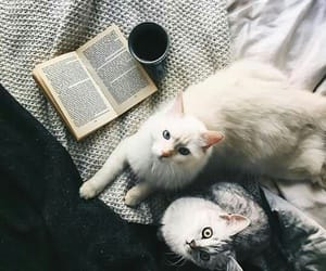 autumn, books, and cat image