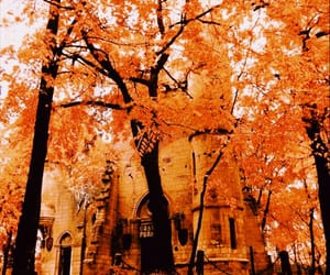 aesthetic, colours, and fall image