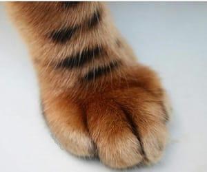 adorable, cat, and gatito image
