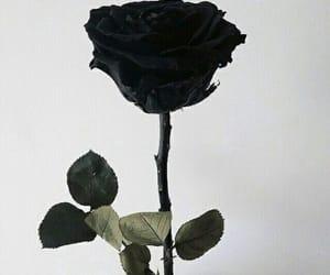 black, black rose, and black color image