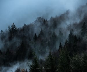 evergreen, fog, and forest image
