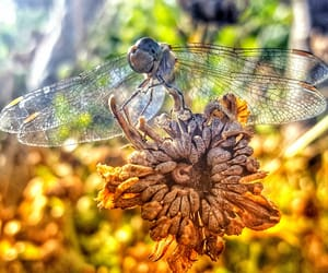 nature, summer, and dragon-fly image