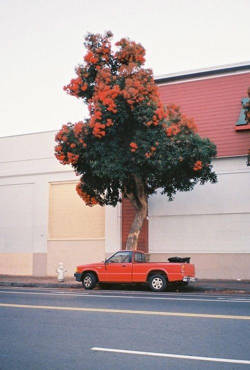 car, tree, and orange image
