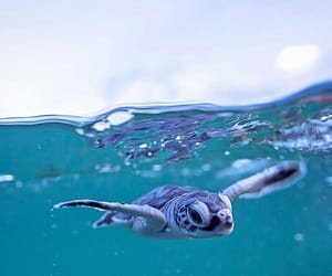 blue, ocean, and turtle image