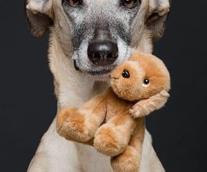 adorable, dog, and animal photography image