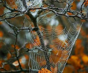 autumn, spider webs, and Halloween image