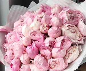 beautiful, peonies, and pink image