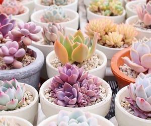 decoracion, naturaleza, and plantas image
