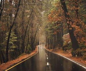 autumn, beautiful, and Dream image