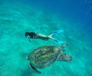 animals, nature, and turtle image