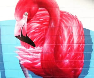 flamingo, street art, and wings image