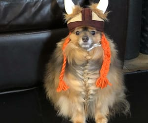 dog and viking image