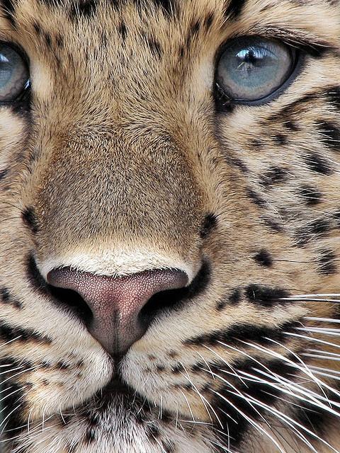 amazing, animals, and article image