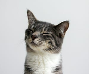 cat, colors, and funny image