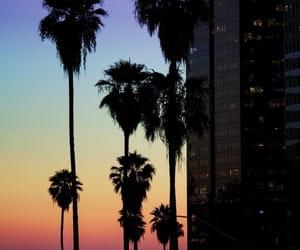 natural beauty, palmtrees, and rainbowsky image