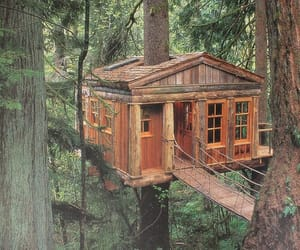 nature and treehouse image