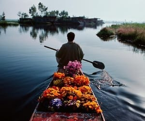 flowers, boat, and nature image