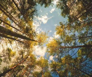 forest, sky, and trees image