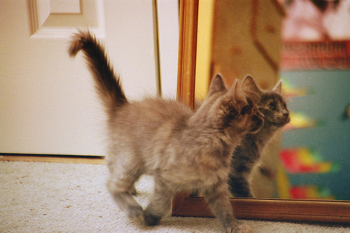cat, mirror, and vintage image