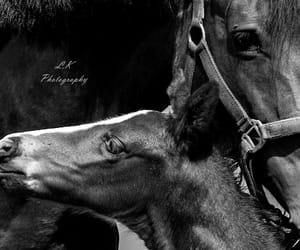 animals, baby, and horses image