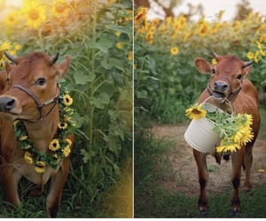 animals, nature, and baby cow image