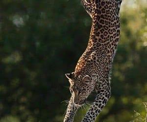 Animales, naturaleza, and salto image