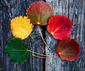 autumn, seasons, and colors image