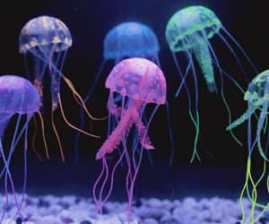 aquarium, beautiful, and colors image
