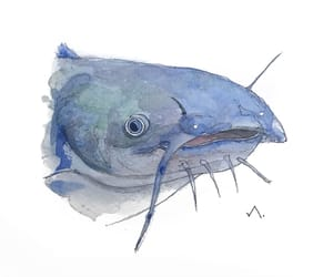 aesthetic, draw, and fish image