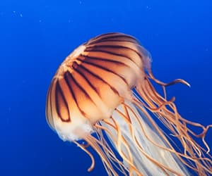 blue, glow, and jelly fish image
