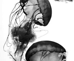 black, jelly fish, and white image