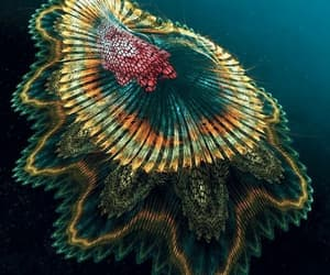 beautiful, glow, and water image